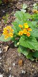 flowers of the medellin gardens stock photo