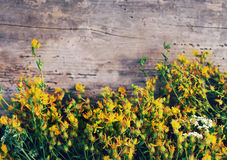 Flowers of medicinal plants St. John`s wort on the old wooden board Royalty Free Stock Photos