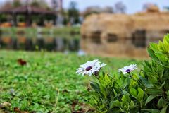 Flowers in Mediterranean Royalty Free Stock Images