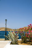 Flowers Mediterranean sea harbor Ios Greek islands Stock Photography