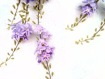 Flowers melt mind. Purple cute there is space on the white background for the add text, images, beautifully clear extra chic gentle luxury snuggle natural Royalty Free Stock Photography
