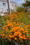 Flowers in Mendocino, California Stock Images