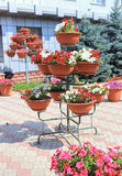 Flowers in metal cache-pots Stock Images