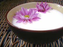 Flowers in milk Royalty Free Stock Photo
