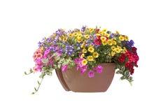 Flowers miniascape Royalty Free Stock Photos