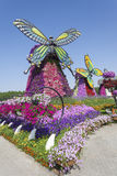 Flowers at the Miracle Garden in Dubai Stock Images