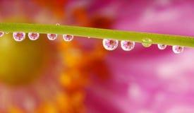 flowers mirroring in rain drops - macro Royalty Free Stock Images