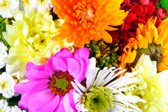 Flowers mix. Close-up of colourful summer flowers mix Stock Images