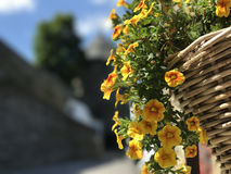 Flowers in Monschau Stock Photography