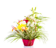 Flowers for mother day Royalty Free Stock Photos