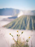 Flowers with Mount Bromo Stock Photography