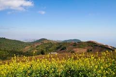 Flowers on the mountain. Yellow flowers on the mountain at Phutubberg,Phetchaboon Thailand Stock Photos