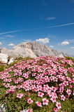 Flowers and mountain. Bouquet of flowers with mountains behind, Julian Alps Stock Photo