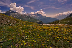 Flowers in mountain Stock Image