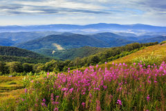 Flowers on a mountain hillside Royalty Free Stock Photography