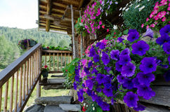 Flowers in a mountain hut Royalty Free Stock Image