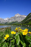 Flowers and mountain lake. At Derborence in the swiss Alps Stock Image