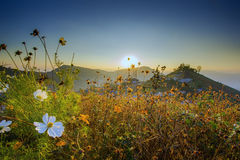 Flowers on Mountain Northern Thailand stock images