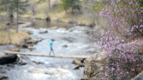 Flowers on a mountain river and rolling over the stock footage