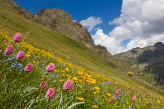 Flowers on a mountain slope Stock Image