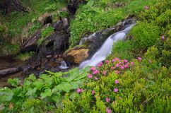 Flowers by a mountain stream Royalty Free Stock Photography
