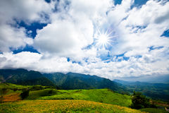 Flowers in the mountain with sunny sky Stock Photo
