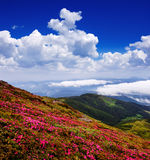 Flowers in a mountain valley Stock Photos