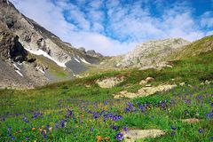 Flowers and mountains. Altay. Russia Royalty Free Stock Images