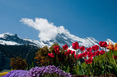 Flowers and mountains. View on the mountains from a garden Stock Photography