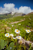 Flowers in mountains Stock Image