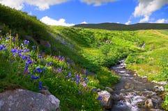 Flowers and mountains. Flowers and mountains, Altay Royalty Free Stock Photos