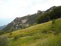 Flowers in the mountains against the background of rocks. Yellow green grass Royalty Free Stock Image