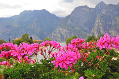 Flowers and mountains Royalty Free Stock Photos