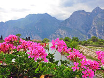 Flowers and mountains Royalty Free Stock Images