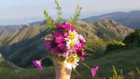Flowers on the mountains. My beautiful flowers. I am closer to nature stock photos