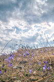 Flowers in the mountains. Russia, Crimea. Magic flowers in the mountains. Russia, the Crimea Royalty Free Stock Photos