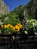 Flowers and mountains in spring at Matka Canyon. Yellow Pansies with lovely flowers in the foreground and the green mountains of Matka Canyon in the background stock photography