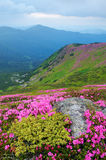 Flowers in the mountains Stock Images