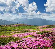 Flowers in the mountains. Summer landscape on a sunny day Stock Images