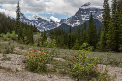 Flowers and the mountains Royalty Free Stock Images