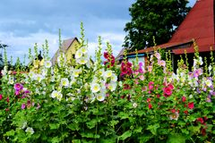 Flowers. Much different colours flowers decorate steepe and timber landscape Stock Photos