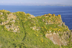Flowers on Mullion Cliffs Royalty Free Stock Photo