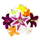 Flowers of multicolored lilies on a white background. Bouquet of realistic multicolored lilies Royalty Free Stock Photo