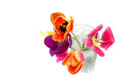 Flowers. Multicolored tulips, flowers are in a glass vase, water, white background, isolated Stock Photography