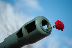 Flowers in muzzle. Red flowers in tank muzzle Stock Photos