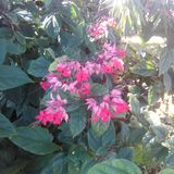 Flowers from my garden. Pink flowers Gardening autumn colour Royalty Free Stock Photo