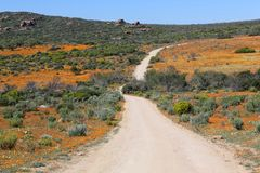 Flowers at the namaqualand national park Stock Image