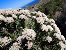 Flowers in namaqualand national park Royalty Free Stock Photo