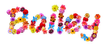 Flowers Name Bailey Royalty Free Stock Photos