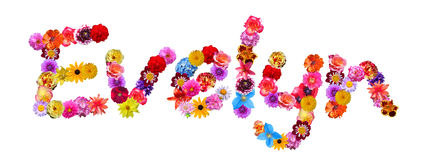Flowers Name Evelyn Royalty Free Stock Image